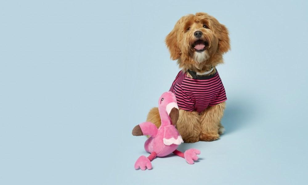 hoofdfoto hond ydl