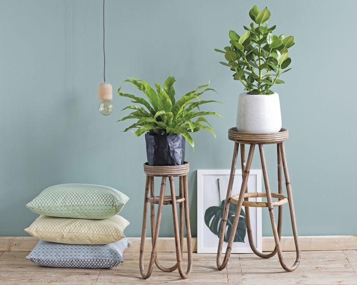 De mooiste planten voor in je woonkamer