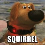 Is Your Dog Like the One from the Movie Up? (SQUIRREL!)