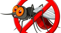 IS DENGUE A COMMUNICABLE DISEASE?