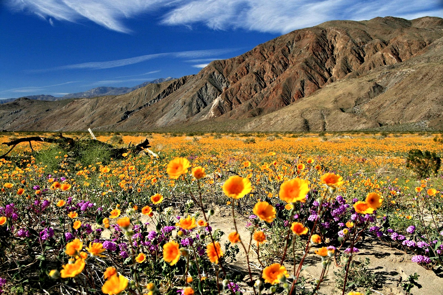 Camino Del Oro Parking Anza Borrego Desert State Park 8 Reasons To Visit Now Ync