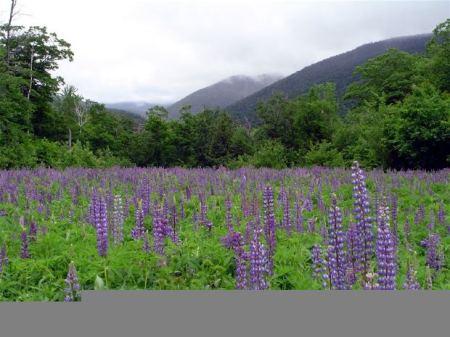 mountain-flower-green