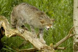 cat-kitten