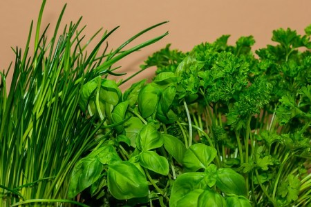 Herbs To Help You Use Less Salt