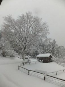 けやき・大雪