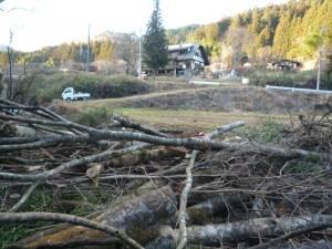伐採した原木