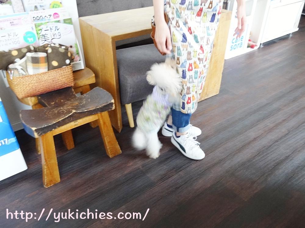 cafe sora & Dog salon Wonderful トイプー諭吉