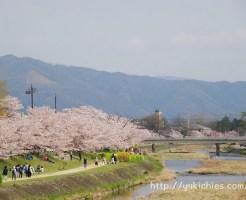 鴨川 西賀茂から北山 御園橋から見た桜と大文字山