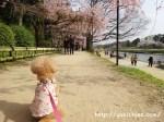 北山 半木の道(なからぎのみち)京都の桜