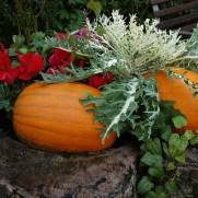 pumpkin-850539_640