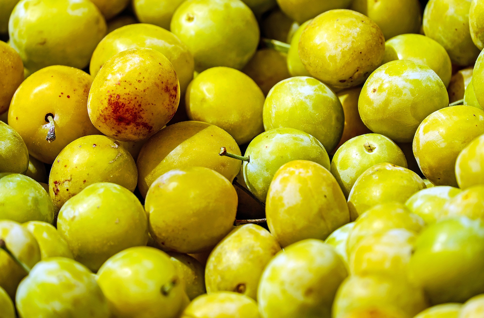 yellow-plums-1595378_1920