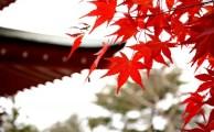 【大阪・東京開催☆潜在意識体験入門セミナー】気になる講座内容をご紹介♪