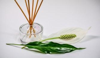 scent-1059419_640