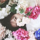 flowers-749661_640