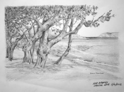 Small Of Sea Grape Tree