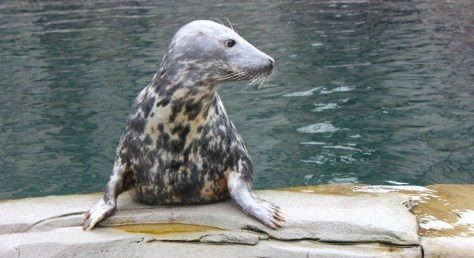 Seal at the Tierpark Hagenbeck Zoo in Hamburg Germany via ZaagiTravel.com