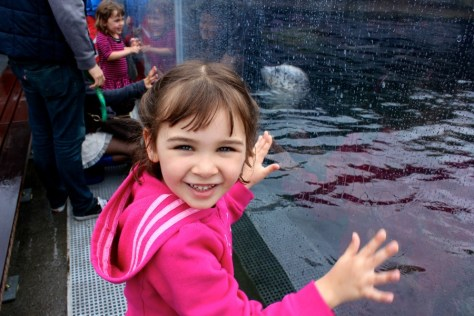 Watching the seals at the Seattle Aquarium in Seattle, Washington, United States via ZaagiTravel.com