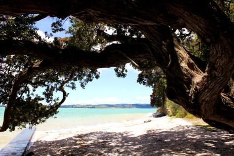 Cockle Bay Beach in New Zealand via ZaagiTravel.com