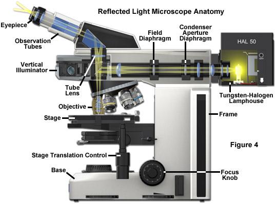 ZEISS Microscopy Online Campus Microscopy Basics Illumination