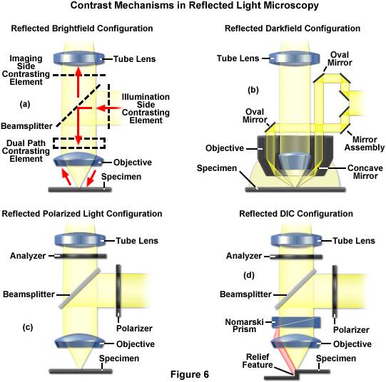 ZEISS Microscopy Online Campus Microscopy Basics Reflected Light