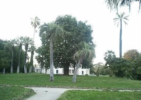 villa torlonia: il bagolaro, albero del sangha
