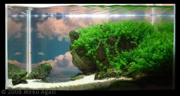 Fish Tank 3d Wallpaper Fishkeeping Zen Time