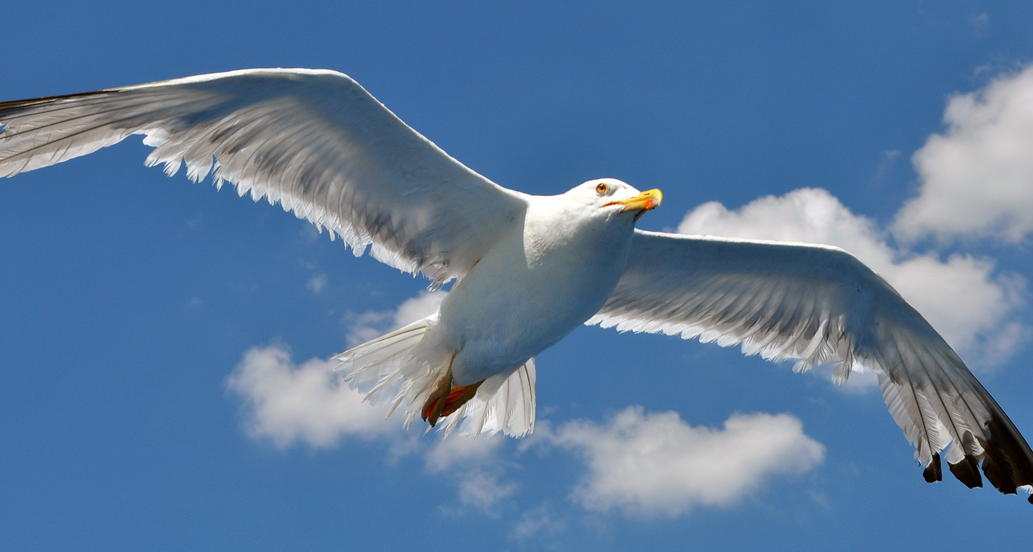 Greece-seagull