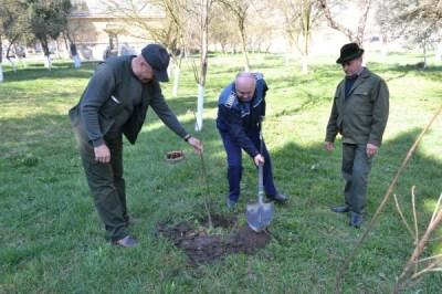 Polițiști ecologiști, voluntari în plantarea de arbori
