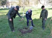 plantare de pom
