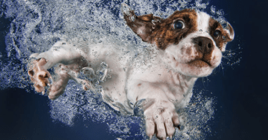 Strange Photos Of Puppies Underwater Are Absolutely Adorable. I Gotta See More.