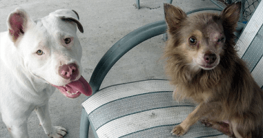 This Stray Pit Bull Will Show You What True Friendship Means.
