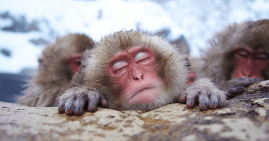 These Expressive Monkeys Will Give You So Many Feels. D'aww...
