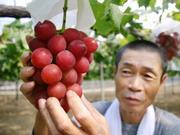 Raisin' cash: Japan grapes fetch $10,900 at auction