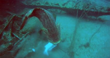 Spear Fisherman Has A Very Frustrating Day After He Runs Into Goliath Groupers