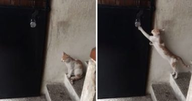 This Cat Knocks But No One Is Home -- Or They're Just Ignoring Him