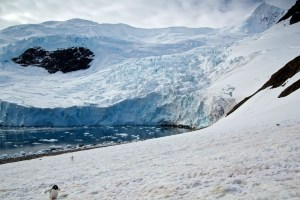 He Was Taking Photos Of A Glacier In Antarctica When Suddenly, Out Of Nowhere... WHOA!