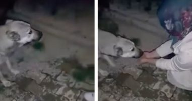This Dog Thanks A Woman For Stopping To Help Him Get Some Water