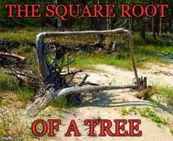 square root of a tree