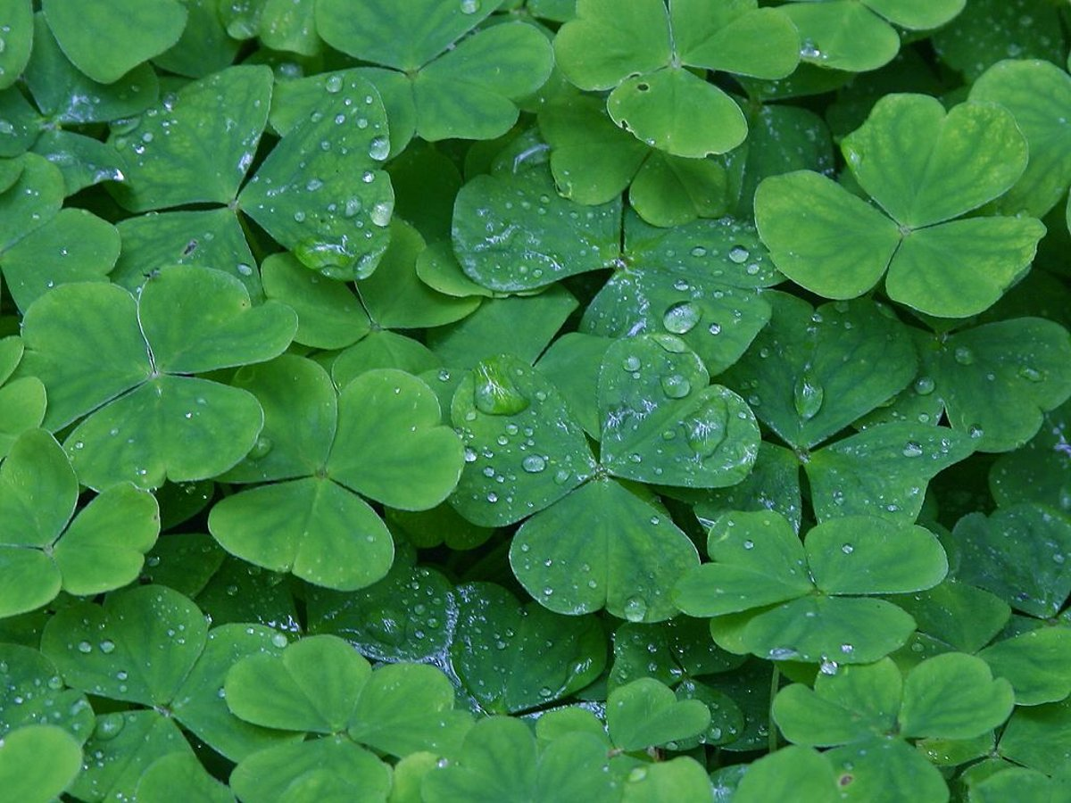 Contoh Gambar Karpet Karakter Saint Patty 39s Backgrounds And Codes For Any Blog Web Page