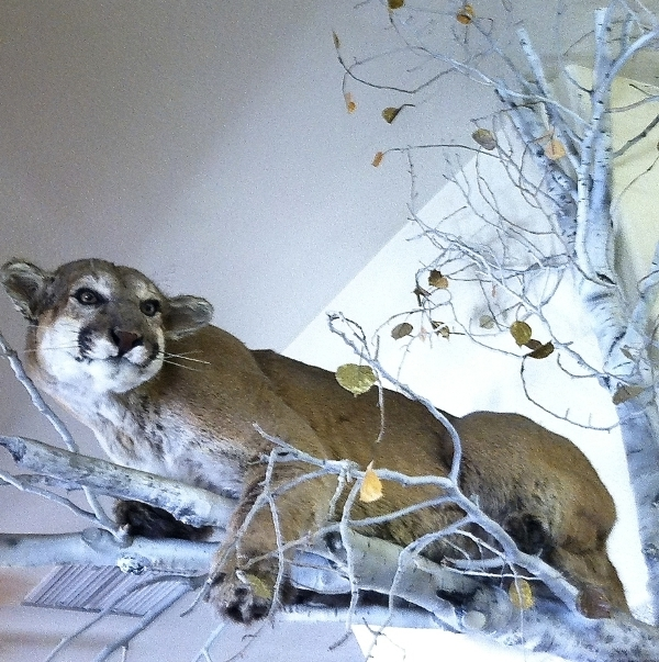 cold spring cougar women Looking for something to do in cold spring whether you're a local, new in town or just cruising through we've got loads of great tips and events you can explore by location, what's popular, our top picks, free stuff you got this.