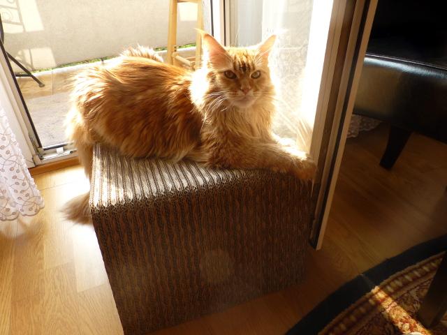 Kocie łoże i kot