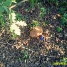 Żołyńskie grzyby