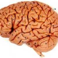 Tes Mata: Otak Anda Lebih Logis atau Intuitif?