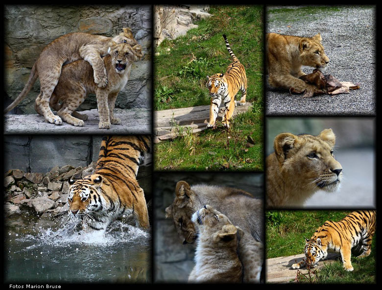 Collage Fotos Www.zoo-wuppertal.net - Zoo Wuppertal