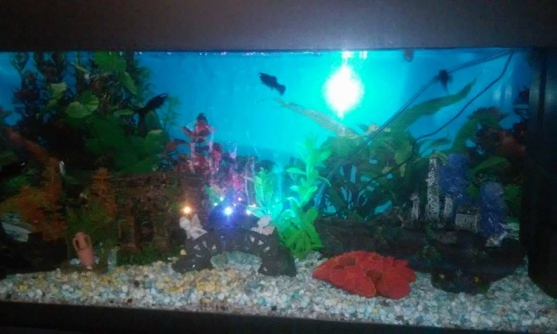 Eclairage Aquarium Led Avis Diffuseur De Bulles Avec Leds Superfish Led Bubble