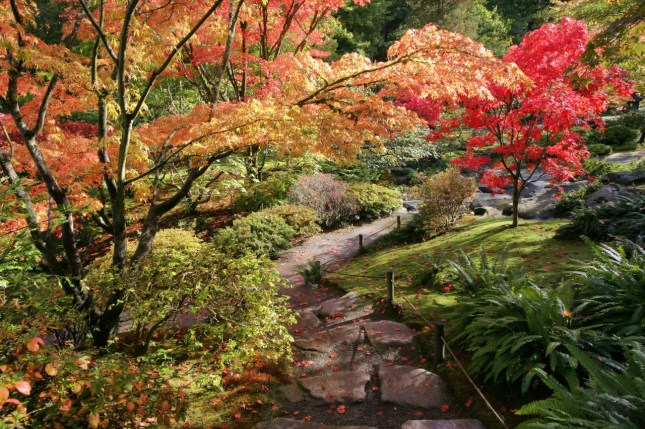 Portland Or Fall Had Wallpaper Fall Colors In The Seattle Japanese Garden Seattle Wa