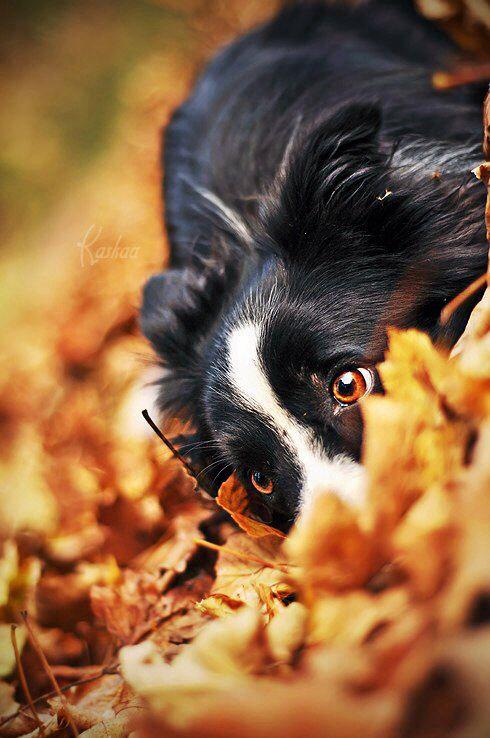 Puppies And Fall Wallpaper Jesienne Psie Harce 171 Psy 171 Śmieszne Filmy O Zwierzętach