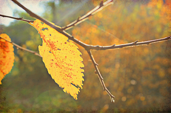 free fall desktop background solitary yellow leaf beautiful colorful wallpaper