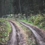 road-791160_640