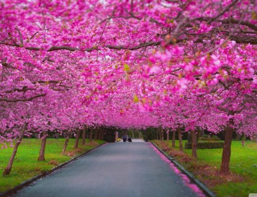 Calling back the values which marked magical spring seasons